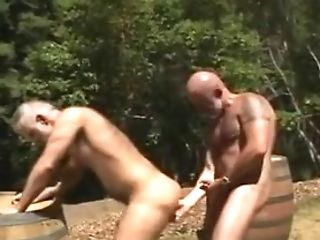 Bear, Daddies, Outdoor,